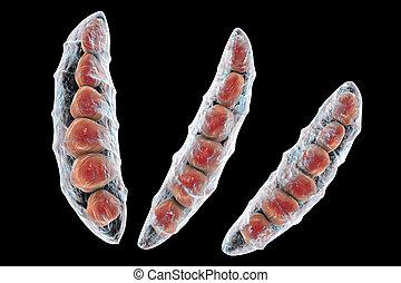 funghi, fusarium, quale, produrre, mycotoxins