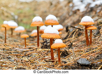 funghi, in, autunno, legno