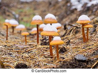 funghi, legno