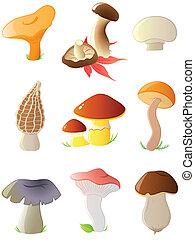 funghi, lucido, foresta