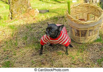 funghi, morels, e, uno, piccolo, nero, dog.