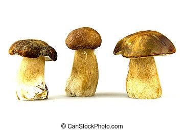 funghi, -, porcini, boletus, edulis