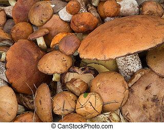 funghi selvaggi, fine