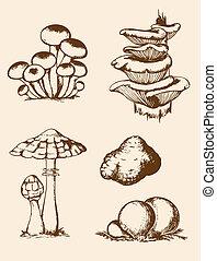 funghi, vendemmia, mano, foresta, disegnato