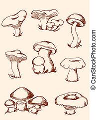 funghi, vendemmia, set, foresta