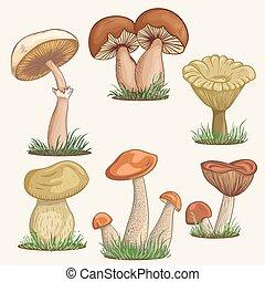 funghi, vendemmia, varietà