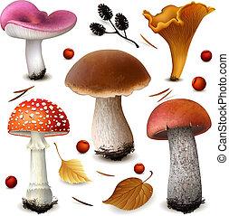 funghi, vettore, set
