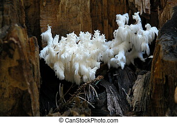 A fungi growing in a tree stump in whttemud nature reserve park in Edmonton Alberta