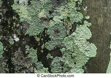 fungi., simbiótico, liquenes