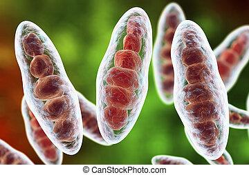 Fungi Trichophyton illustration - Macroconidia multi-celled...