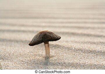 fungo, crescente, sabbia