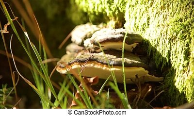 Fungus musroom on bark - Fungus musroom on the bark tree....