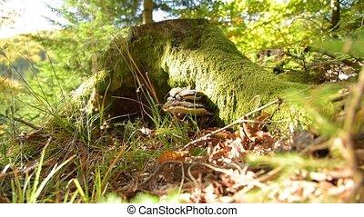 Fungus musroom on bark - Fungus musroom on the bark tree....