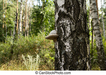 fungus on the tree in nature