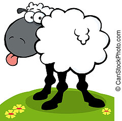Black Sheep Sticking Out His Tongue