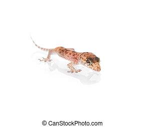 Funky Gecko