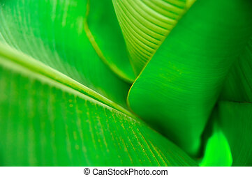 Funnel green leaves palm, top view. Vegetative background with selective focus. For cover, poster, advertising and decoration.