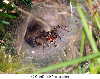Funnel spider waiting patiently for a prey