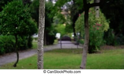 Funny actor looks out of young tree and runs away in park - ...