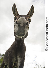 Funny and Silly Jackass or Donkey - Humorous image of a jack...
