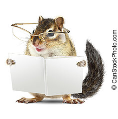 Funny animal chipmunk with glasses reading book jn white...