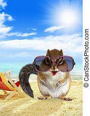 Funny animal chipmunk with sunglasses on sandy beach