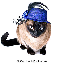 Funny Pet Animal Cute Siamese Hilarious Humor Cat isolated on the white background
