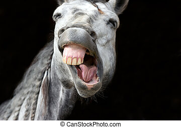 Funny Animal - Funny animal is a white horse laughing his...