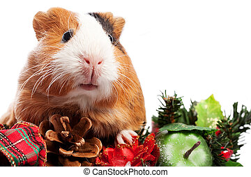 Funny Animal. Guinea Pig Christmas portrait