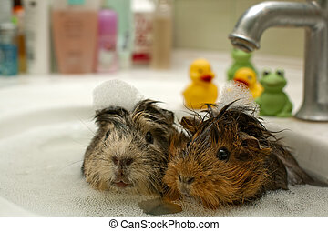 funny animals in the pool