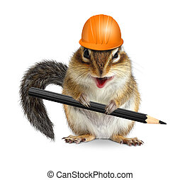 Funny architect chipmunk with pencil and hard hat on white -...