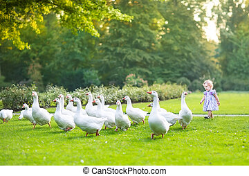 Funny baby girl chasing wild geese in a park on a beautiful...