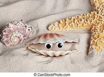 Funny beach seashell