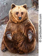 Funny bear sitting