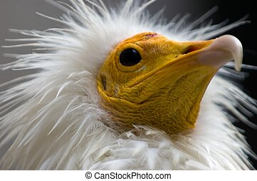 Funny bird - Head of a funny bird
