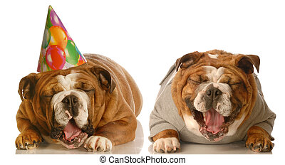 funny birthday dogs - one english bulldog laughing at ...