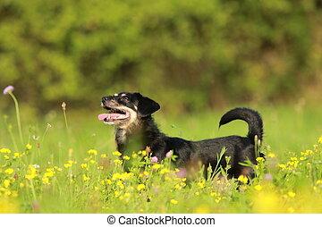 funny black dog standing in flower field