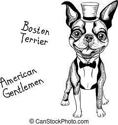 funny cartoon hipster Boston Terrier breed smiling - Hipster...