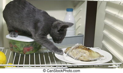 Funny cat eating fried chicken inside the fridge