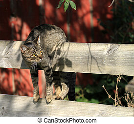 Funny cat hanging on fence