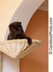 Funny cat in a basket