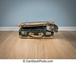 Funny cat in a vintage suitcase