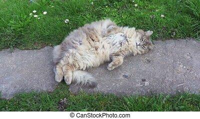 Funny cat in garden