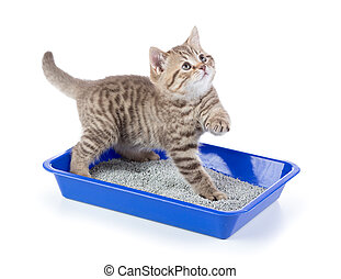 Funny cat in toilet tray box with litter isolated
