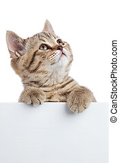 Funny cat kitten peeking out of a blank banner, isolated