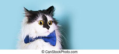 funny cat panoramic mockup