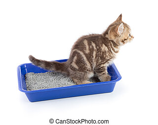 Funny cat pipi in toilet tray box isolated
