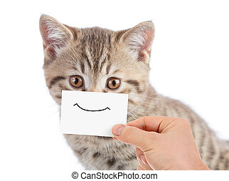 funny cat portrait with smile on cardboard
