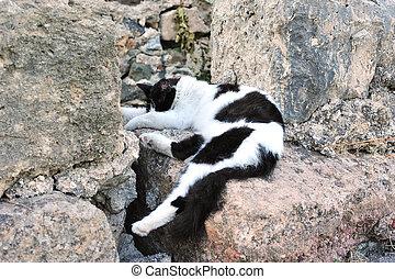 Funny cat sleeping