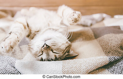 Funny cat sleeping on his back with paws up.